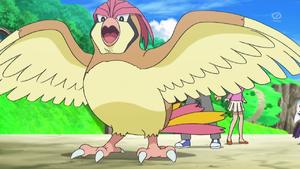 evolucion-de-pidgey-ataque-pidgeotto