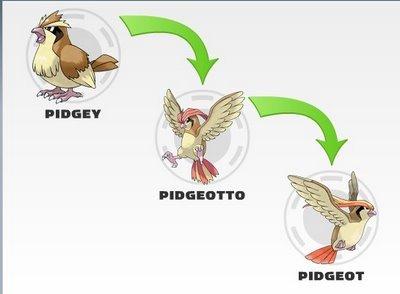 evolucion-de-pidgey-evolucion
