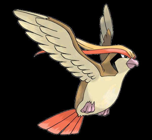 evolucion-de-pidgey-pidgeot
