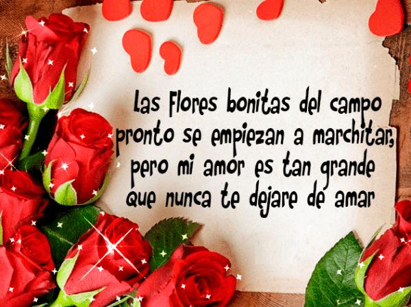 los-mensajes-de-whatsapp-mas-romanticos-de-san-valentin-2017-mensajes-de-amor-frases-flores-del-campo